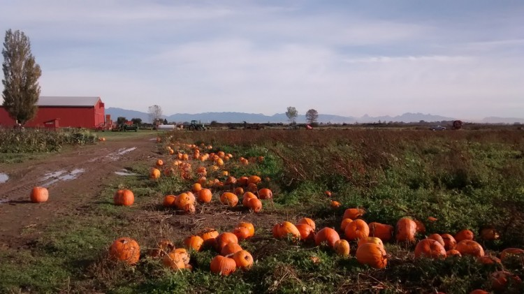 Ladner Pumpkin Ride